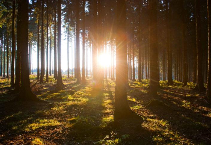 Naturpark Arnsberger Wald